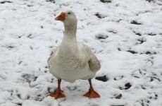 It's back: snow to return across Ireland tonight