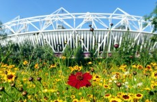 NFL undermines Hammers' Olympic hopes