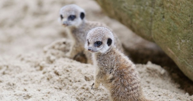 Photos: the cutest Dublin Zoo arrivals of 2012