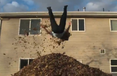VIDEO: Jumping into the world's biggest pile of leaves