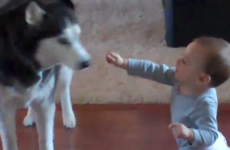VIDEO: Baby talks to dog... dog talks back