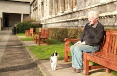 Update #2: Trinny the Trinity College cat still missing
