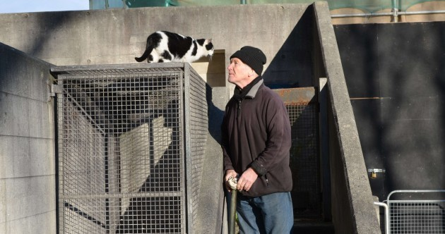Pic: Three days after disappearance Trinny the Trinity College cat returns