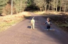 Take a break and watch the cutest video ever