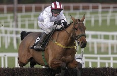 Pandorama out of Hennessy but Cheltenham Gold Cup bid in the balance