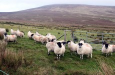 United Arab Emirates market opens to Irish sheep meat