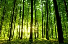 Coillte exports reach 'record number' of countries in 2012