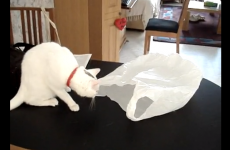 Take a break and watch these cats versus plastic bags