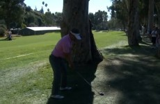 VIDEO: Luke Donald claims birdie with impossible shot from behind a tree