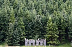 '2,500 jobs jeopardised' by sale of Coillte's harvesting rights - report
