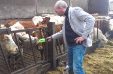 The Manure Matrix in Fermanagh – is this the best fundraiser of 2013?