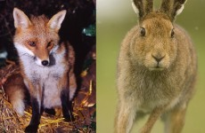 Irish Wildlife Trust calls on public to help change animal welfare bill