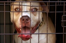 New study links violent crime with dangerous dog trade