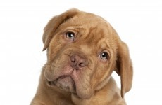 Huge variations in payment of dog fines by local authorities