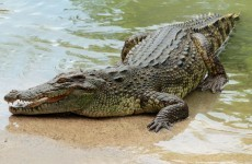 Frenchman fights off crocodile in Australia after it latches onto his head