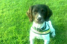 'Ralph' the dog sniffs out drugs worth €190,000 at Rosslare Europort