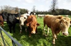 Fodder from France due tomorrow for stricken Irish farmers