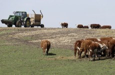 Fodder scheme doubled to €2m and extended for two more weeks