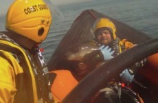 VIDEO: Baby porpoise rescued after becoming stranded on Dublin beach