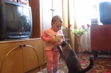 This is what happens when a cat confronts a baby