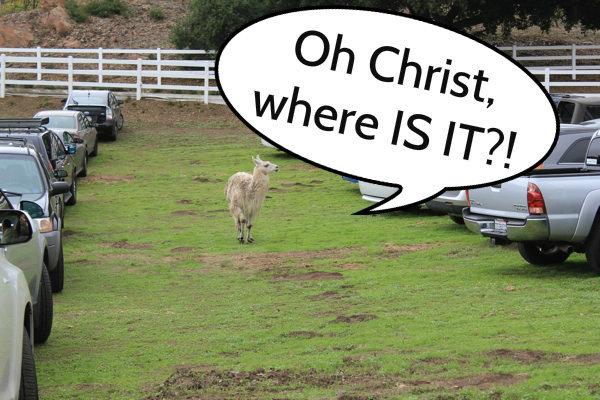 Lost-Llama-