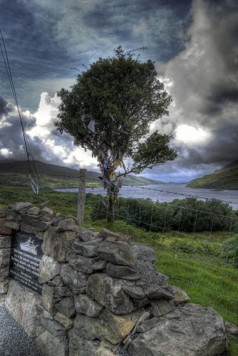 Fjord Killary- Fairie tree 1