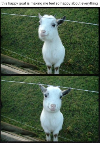 This goat makes me really happy. - Imgur