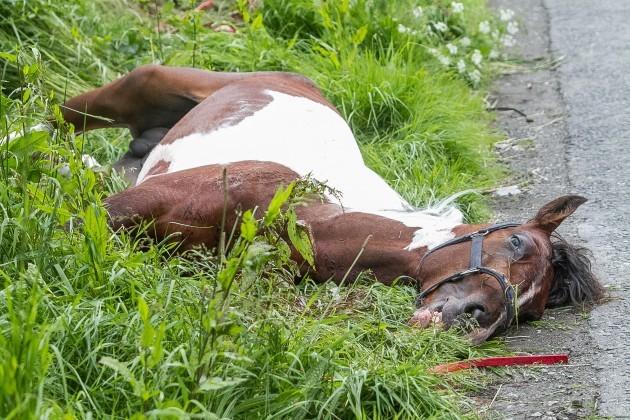 Sulky Race Horse Death Kilkenny-9