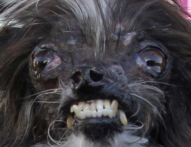 Meet Peanut Officially The Ugliest Dog In The World 183 The