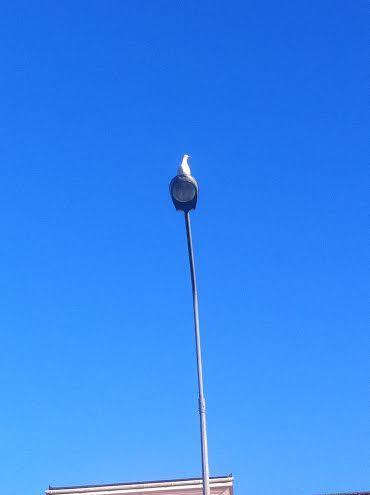 johnathan seagull