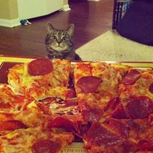 funny-cat-pics-088-013