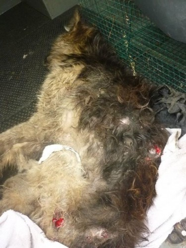 Ennis Dog Pound - WARNING ANIMAL CRUELTY!! THESE PICTURES... | Facebook