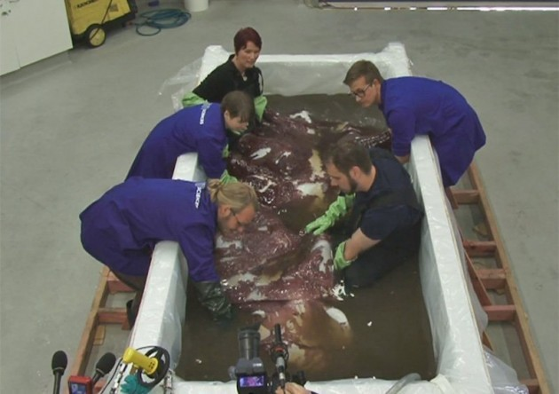 colossal-squid-body