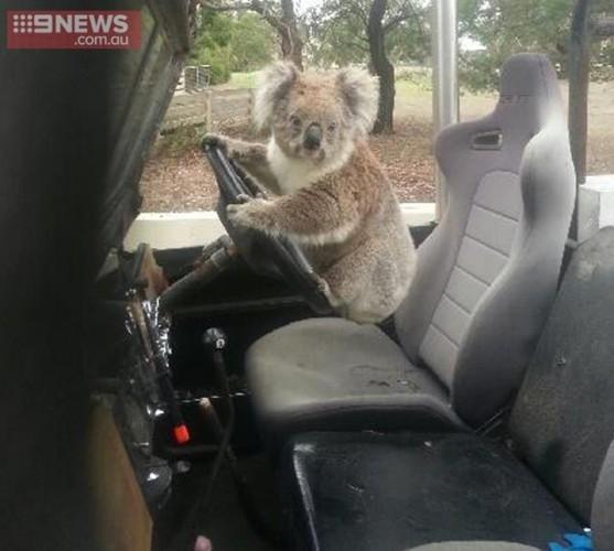 koalacar