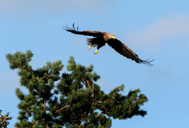Eagles_056 (1)