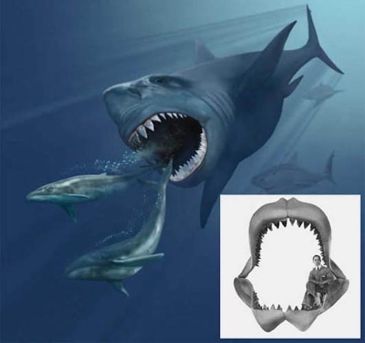 SHARK 10