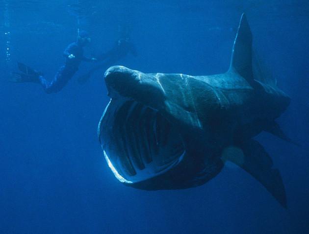 SHARK 16