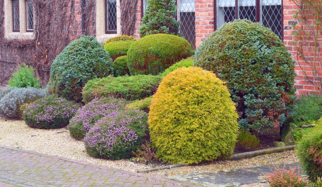 Interesting bushes