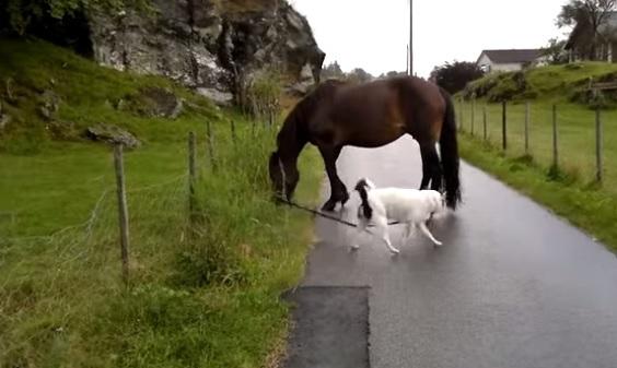 horsedog