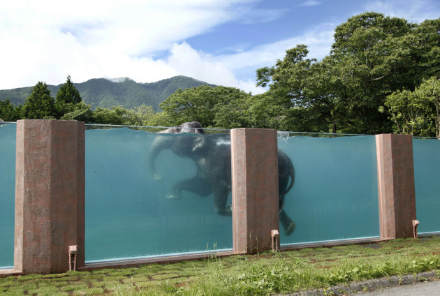 AP10ThingsToSee Elephant Pool