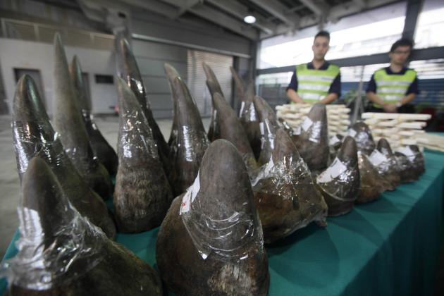 Vietnam Rhino Obsession