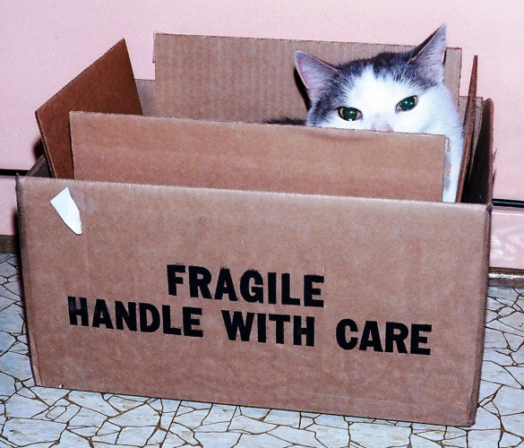 All Things Cats - Handle With Care