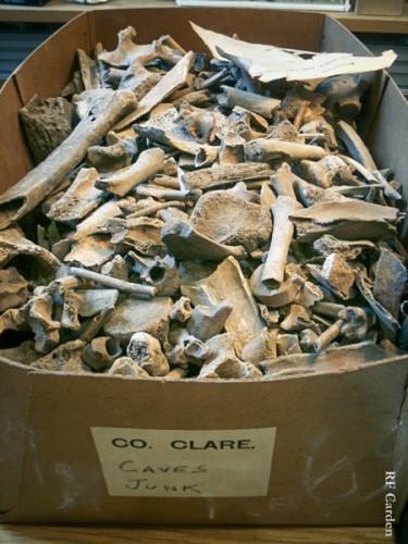 Bones 1