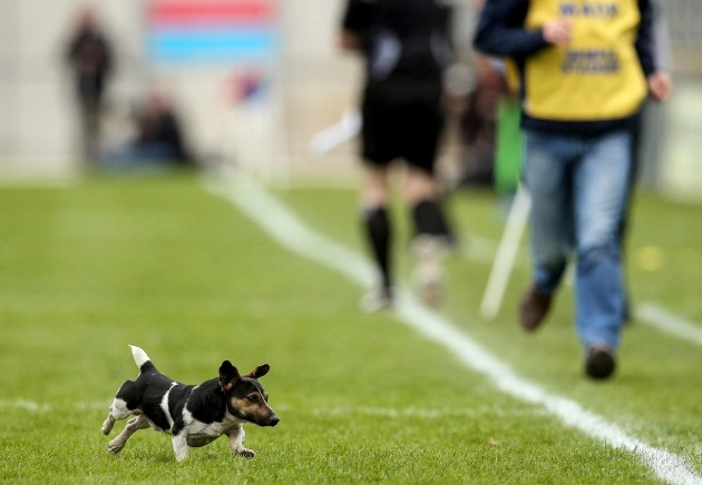 A stray dog makes his way onto the pitch