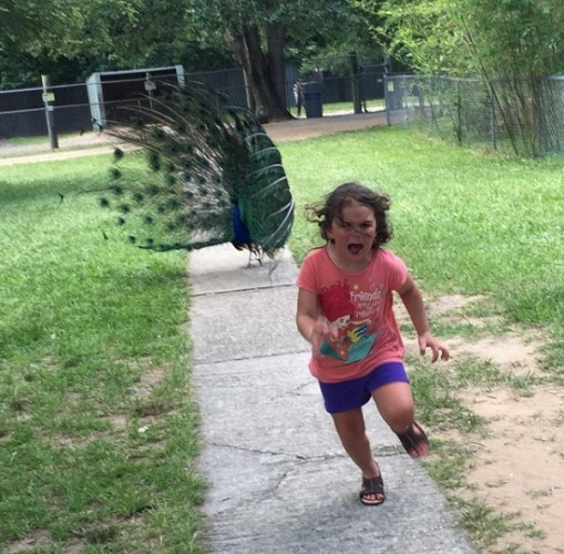 This little girl getting chased by a peacock at the zoo went viral
