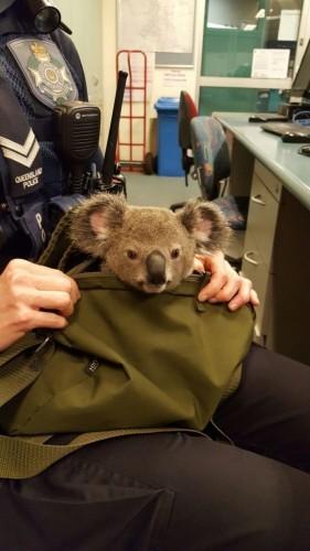Рюкзак коала бэби чертеж рюкзака