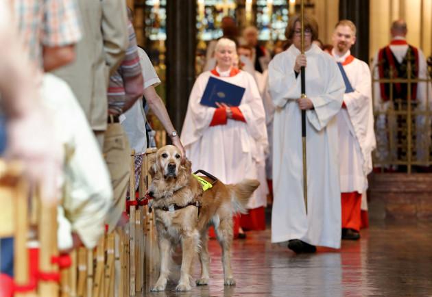 NO FEE IRISH GUIDE DOGS SERVICE JB4