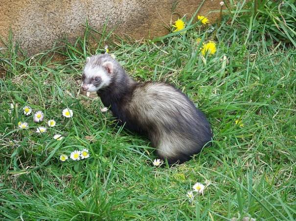 In Pictures Irelands Most Unwanted List Of Invasive Species