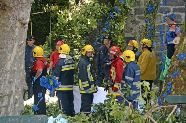 Portugal Fallen Tree