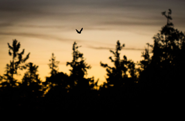 Bat in the Taunus